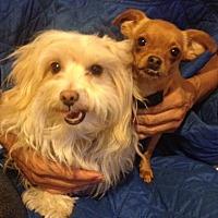 Adopt A Pet :: Stella & Cheeky - Van Nuys, CA