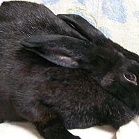 Adopt A Pet :: Tori - Harrisburg, PA