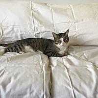 Adopt A Pet :: Xavier - Monrovia, CA
