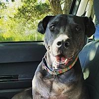 Adopt A Pet :: Tucker - Norman, OK