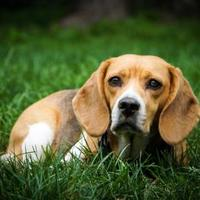 Adopt A Pet :: Crab Apple - New Freedom, PA