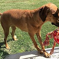 Adopt A Pet :: Princess Allie - Dallas, TX