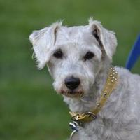 Adopt A Pet :: Paris - Fairfield, OH