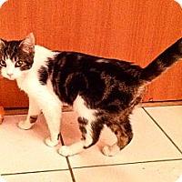 Adopt A Pet :: Thor URGENT! FOSTER NEEDED - San Diego, CA