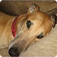 Adopt A Pet :: Elton - Windsor Heights, WV