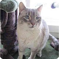 Adopt A Pet :: Shiloh - Pascoag, RI