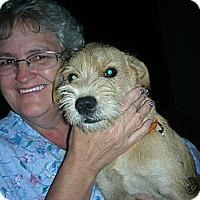 Adopt A Pet :: BLAKE - Bluff city, TN