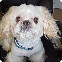 Adopt A Pet :: BLAKE - Cathedral City, CA