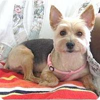 Adopt A Pet :: Portia - Hardy, VA