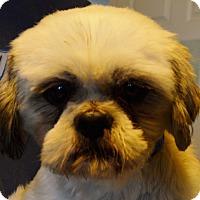 Adopt A Pet :: Kiane - Prole, IA