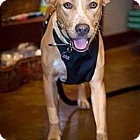 Adopt A Pet :: Hazel - Orange, CA