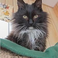 Adopt A Pet :: Tabsy - Corinne, UT