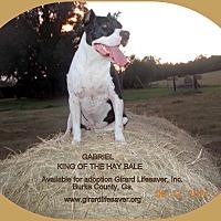 Adopt A Pet :: Gabriel - Girard, GA