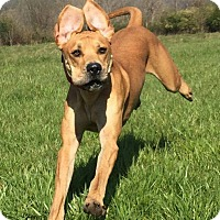 Adopt A Pet :: Scout *Adoption Pending* - Guelph, ON