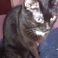 Adopt A Pet :: Minx - Goldsboro, NC