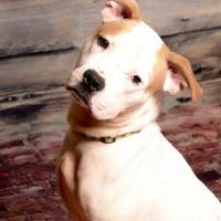 Adopt A Pet :: Lincoln - Frankfort, IL