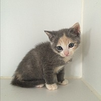 Adopt A Pet :: June Carter - Middletown, NY