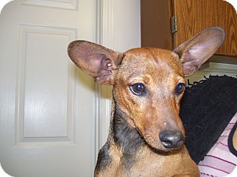 Chihuahua/Dachshund Mix Dog for adoption in Boonsboro, Maryland - Sissy