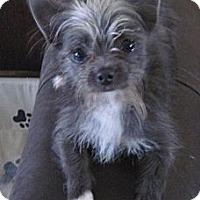 Adopt A Pet :: Nacho - N. Fort Myers, FL