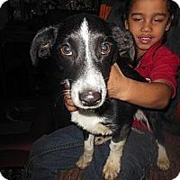 Adopt A Pet :: Lucky - Cincinnati, OH