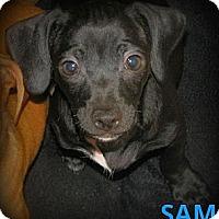 Adopt A Pet :: Sam - Silsbee, TX