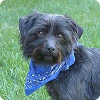 Adopt A Pet :: Dietzel - Mocksville, NC