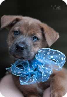 Hound (Unknown Type) Mix Puppy for adoption in Baton Rouge, Louisiana - Ginger