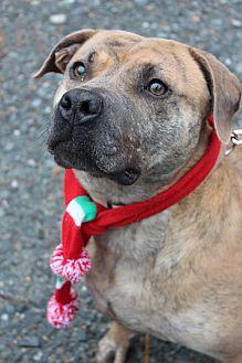 Pit Bull Terrier/Terrier (Unknown Type, Medium) Mix Dog for adoption in Ellijay, Georgia - Emma
