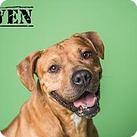 Adopt A Pet :: OWEN - Grafton, OH