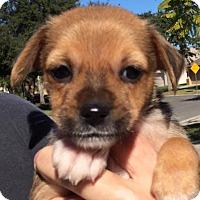 Adopt A Pet :: Carrie#1M - Orlando, FL