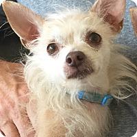Adopt A Pet :: DIXIE - Palm Desert, CA