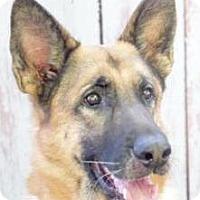 Adopt A Pet :: Hauchi - Inverness, FL