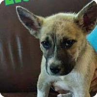 Adopt A Pet :: Everet - WESTMINSTER, MD
