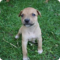 Adopt A Pet :: Peach Pie - Ridgefield, CT