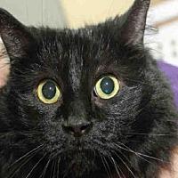 Adopt A Pet :: FUZZY - Pittsburgh, PA