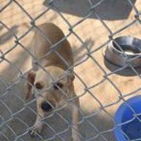 Adopt A Pet :: JAX - Kiln, MS