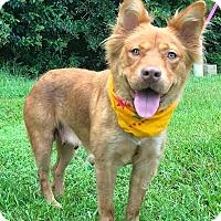 Adopt A Pet :: Millie - St. Francisville, LA