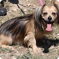 Adopt A Pet :: Tommy - Bandera, TX