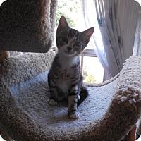 Adopt A Pet :: Peanut - CARVER, MA