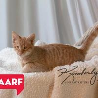 Adopt A Pet :: McGuirk (AM Litter) - Baltimore, MD