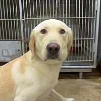 Adopt A Pet :: OSCAR - Upper Sandusky, OH