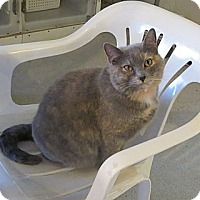 Adopt A Pet :: Angie - Geneseo, IL