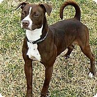 Adopt A Pet :: Dixie - Ridgely, MD