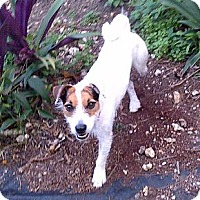 Adopt A Pet :: Eddie - Miami, FL