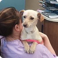 Adopt A Pet :: Scooby - Encinitas, CA