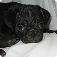 Adopt A Pet :: Parker - Antioch, IL