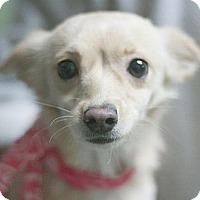 Adopt A Pet :: Mama - Canoga Park, CA