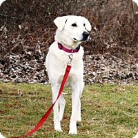 Adopt A Pet :: Bella - Cincinnati, OH