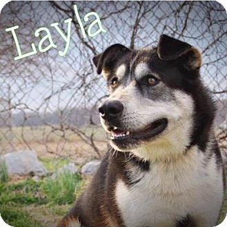 Husky Mix Dog for adoption in Greenville, Kentucky - Layla