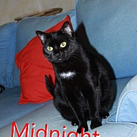 Adopt A Pet :: Midnight - Yuba City, CA